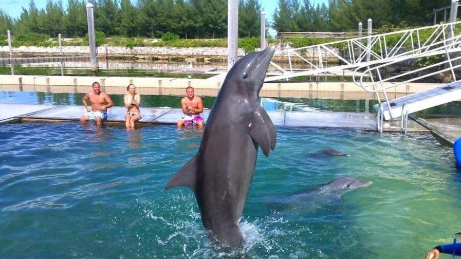 Grand Bahama Island Dolphin