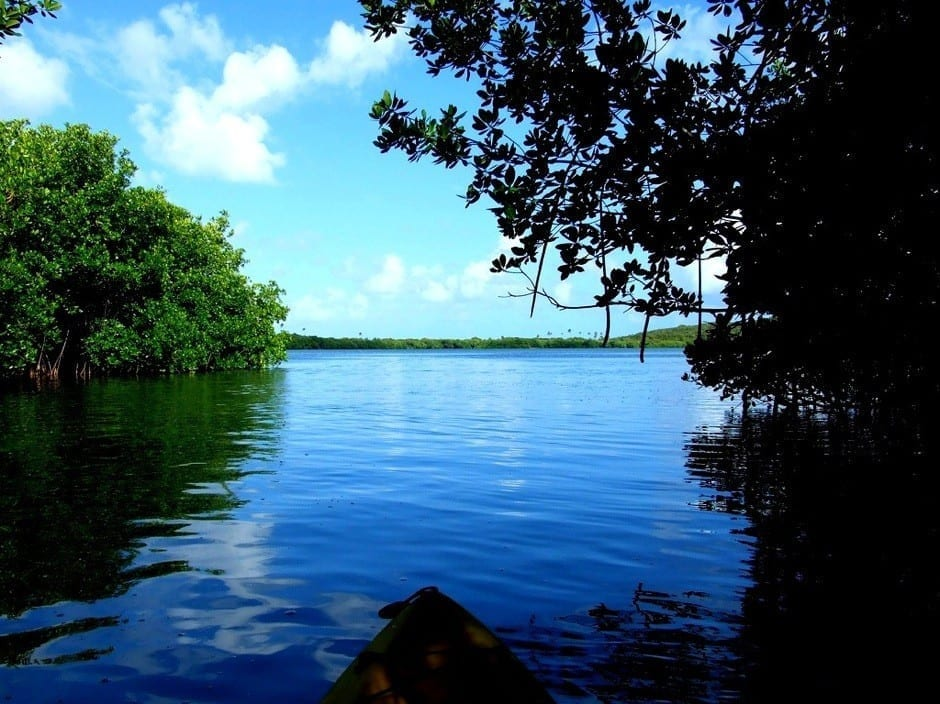 Bio Bay Puerto Rico
