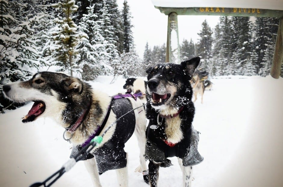 Sled dogs on the Continental Divide