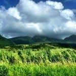 Green St Kitts