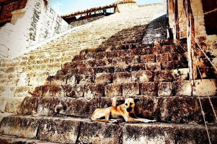 stray dog mexico
