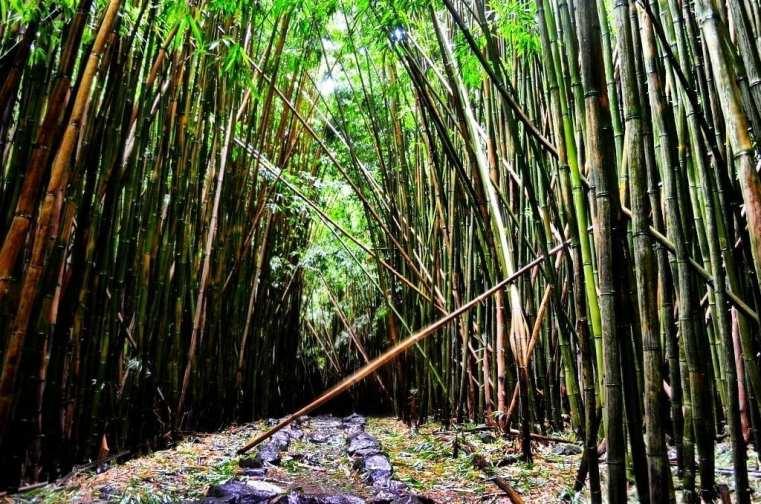 Pipiwai Trail Maui