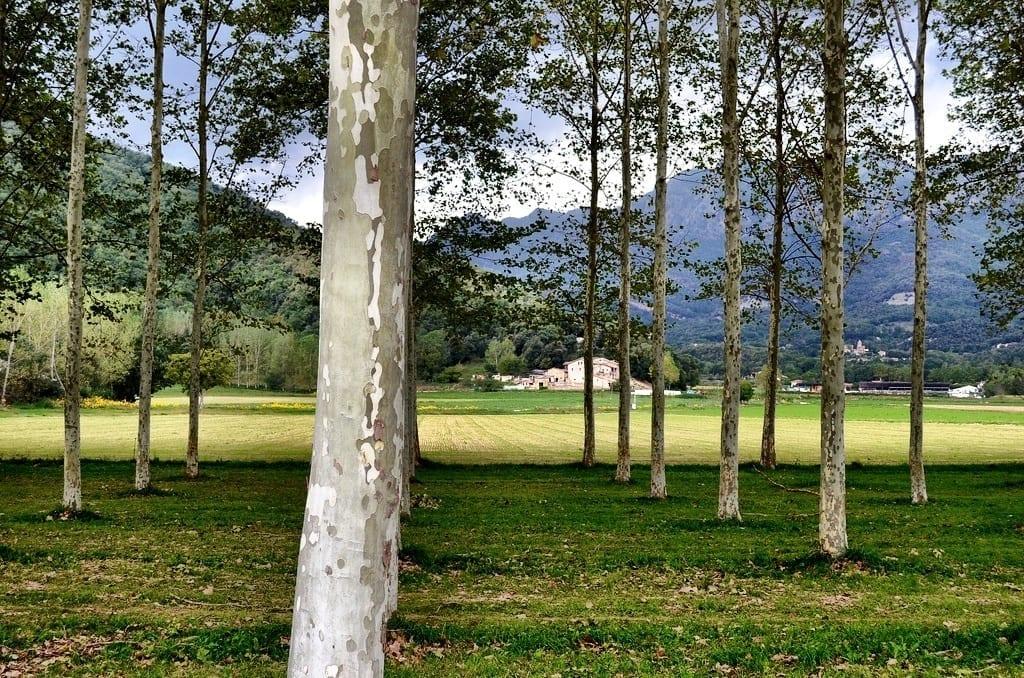 Pyrenees woods