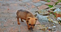 Puppy, Township in South Africa