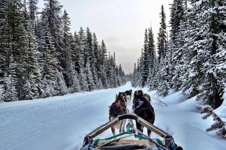 Dog sled Alberta