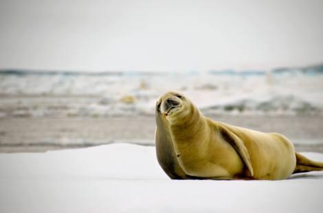 wadell seal