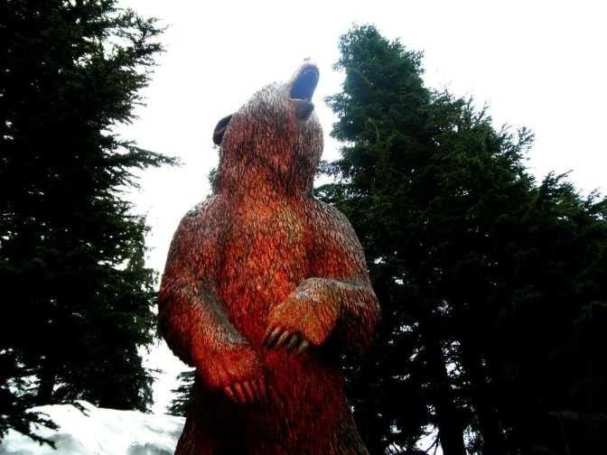 Bear Canada