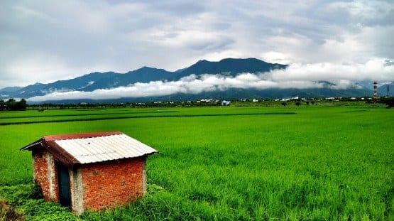 rice Taiwan