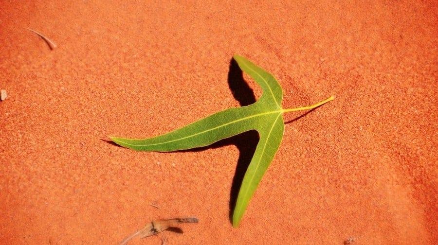 Leaf desert Australia
