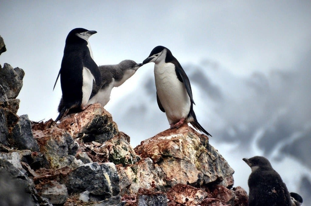 Penguins Antarctica