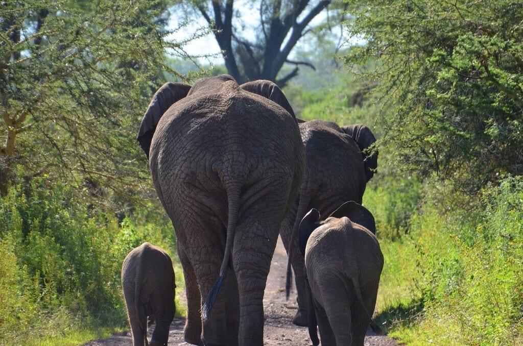 Elephants Ngorongoro Crater Tanzania