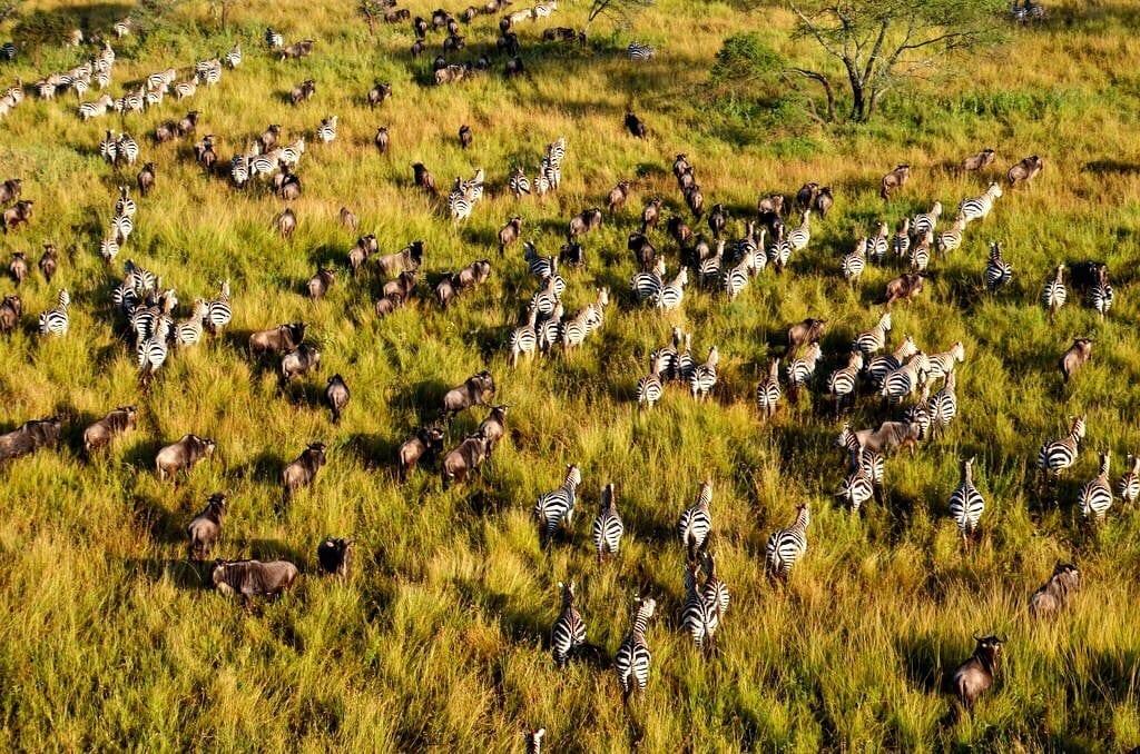 Great Migration Serengeti Tanzania